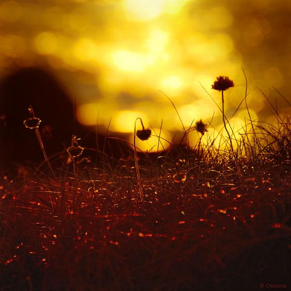 Couchant / Setting Sun