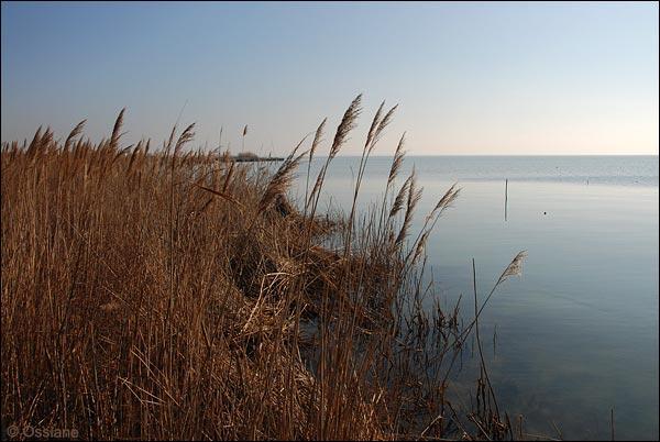 lac de Vaccarès