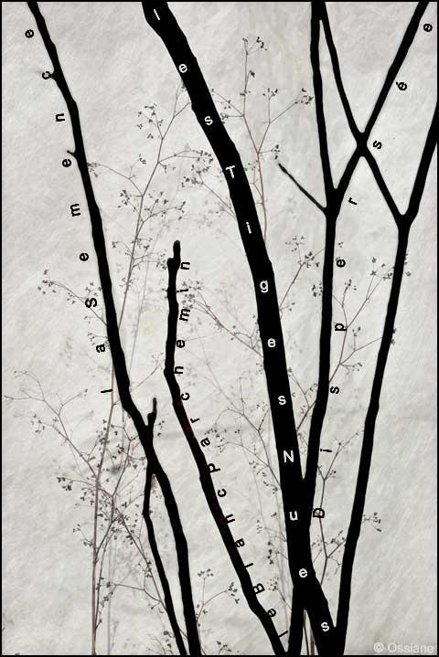 Le blanc parchemin, la semence dispersée, les tiges nues