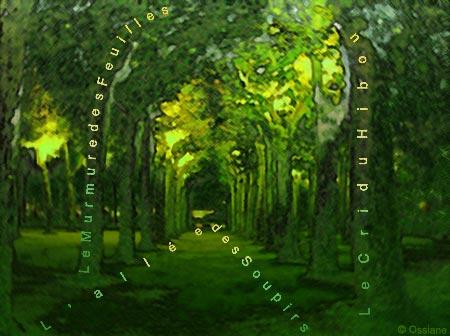 Allée des soupirs, le murmure des feuilles, le cri du hibou