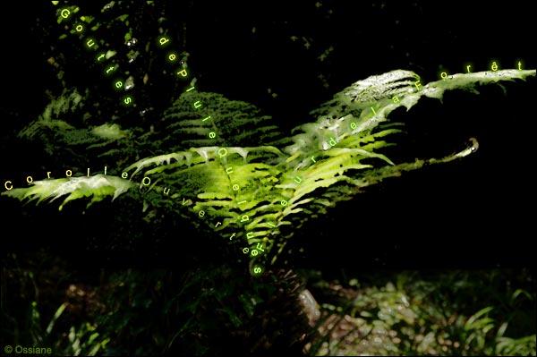 Corolle ouverte, quelques gouttes de pluie, fleur de la forêt
