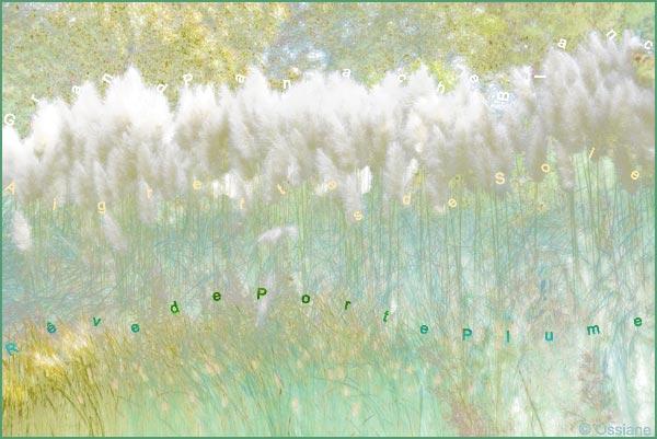 Aigrettes de soie, rêve de^porte-plume, grand panache blanc