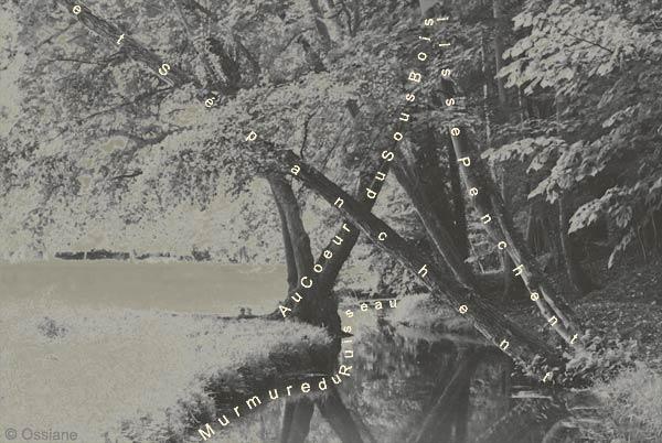 Au coeur du sous-bois, ils se penchent et s'épanchent, murmure du ruisseau