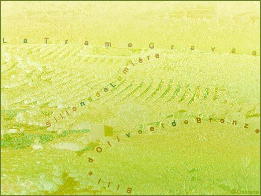 Sillons de lumière, billes d'olive et de bronze, la trame gravée