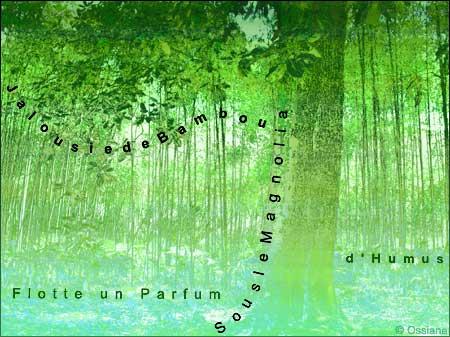 Sous le magnolia flotte un parfum d'humus, jalousie de bambou