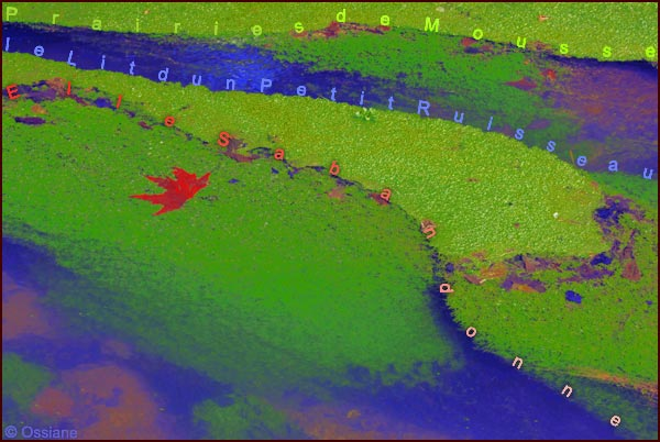 Prairies de mousse, le lit d'un petit ruisseau, elle s'abandonne
