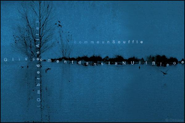 L'ombre des ailes, glissement dans la nuit bleue, comme un souffle