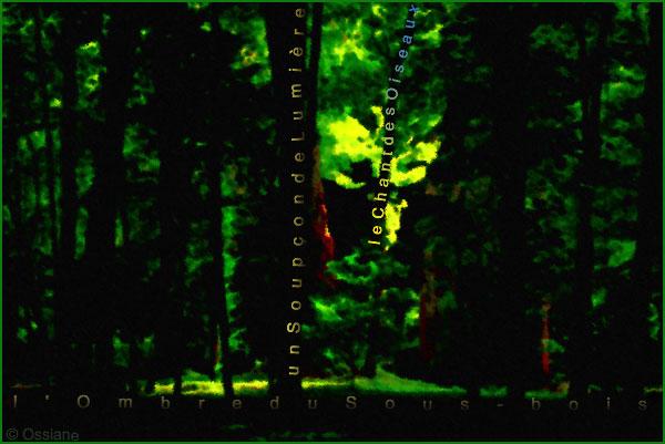L'ombre du sous-bois, un soupçon de lumière, le chant des oiseaux