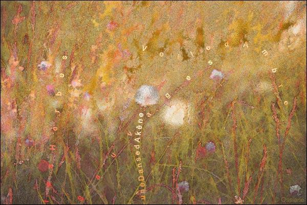 voile d'ambre, une danse d'akènes, les herbes sauvages