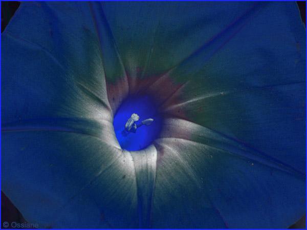 Le coeur en étoile, la liane bleue s'enroule, puits de lumière