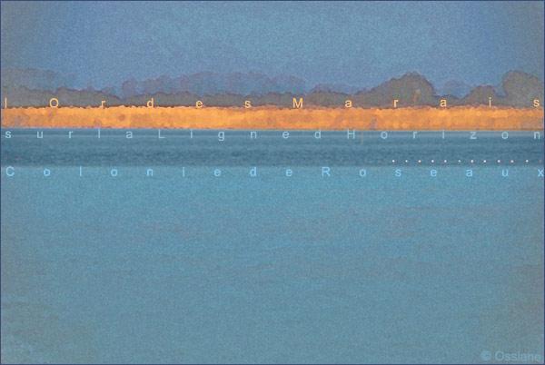 Colonie de roseaux, sur la ligne d'horizon, l'or des marais