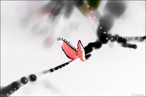 l'ange rouge, l'âme du papillon sur le fil de la nuit