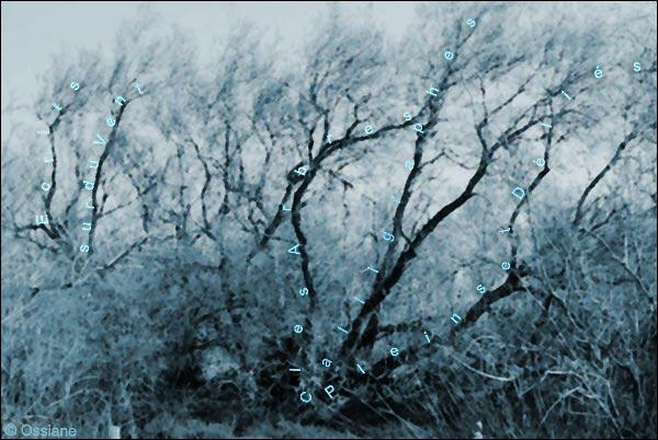 Ecrits sur du vent, les arbres calligraphes, pleins et déliés