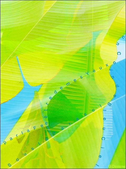 Sous le parasol par la fenêtre de mes yeux, un coin de bleu ciel