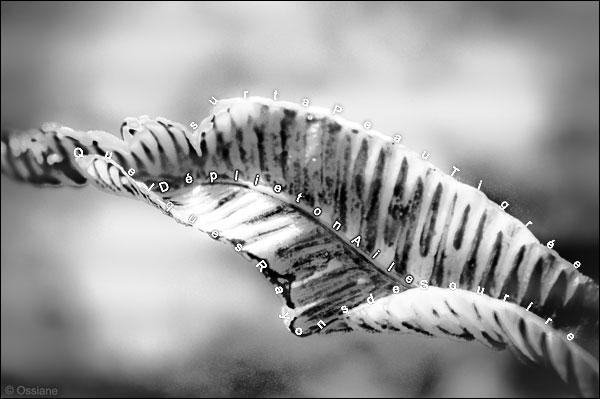 sur ta peau tigrée, quelques rayons de sourire, déplie ton aile