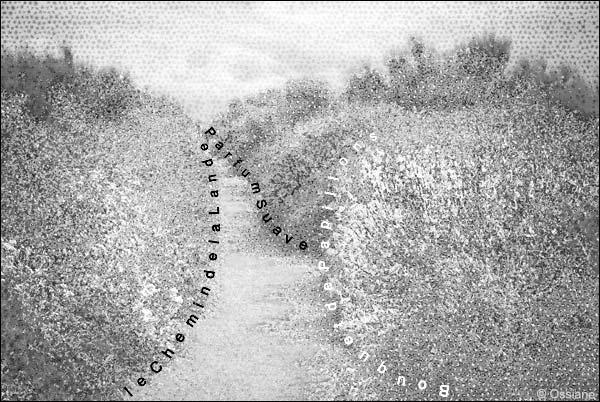 bouquet de papillons, le chemin de la lande, parfum suave