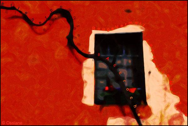 Rouge vermeil, elle serpente, elle s'accroche, la treille merveille