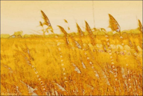 Un souffle indécis, frémissement de plumes, d'ambre et de flou