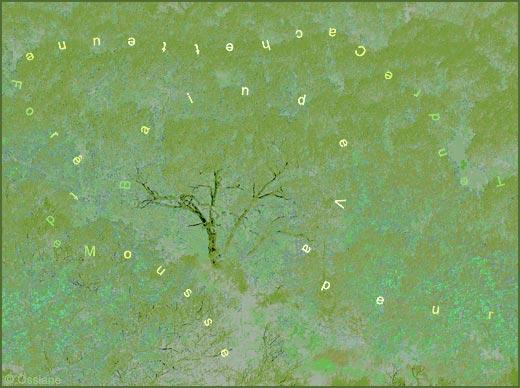 Tendre cachette, une forêt de mousse, bain de vapeur