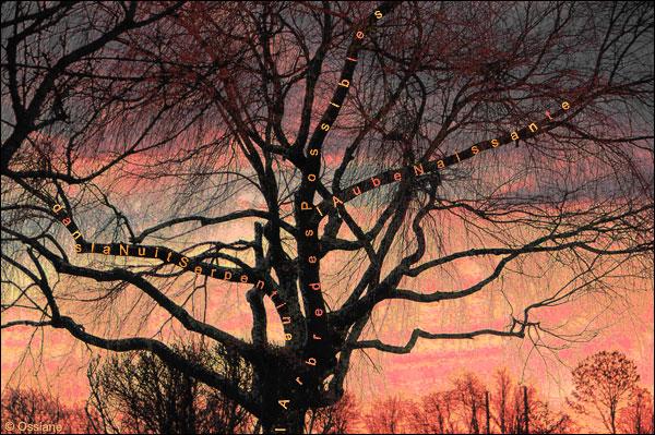 l'arbre des possibles, dans la nuit serpentine, l'aube naissante