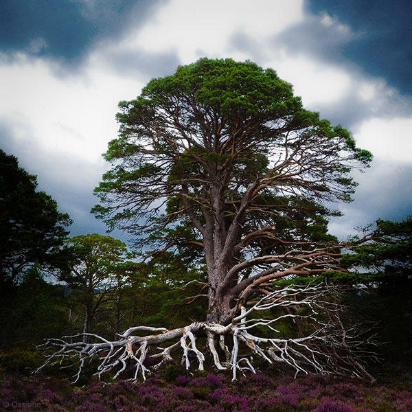 Racines / Roots